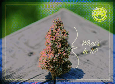 What Can Marijuana Be Laced With?